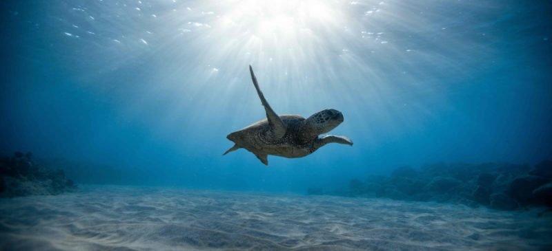 Tartaruga Fondazione Cetacea